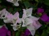 Riu flowers 2012