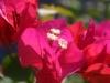 catalonia-flower-1
