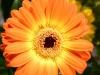 boulder-flowers-005