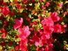 boulder-flowers-2