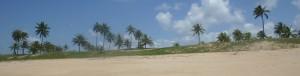 Bahia Header